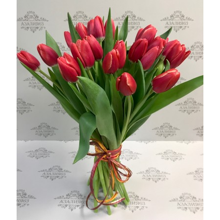 Тюльпаны Чойс