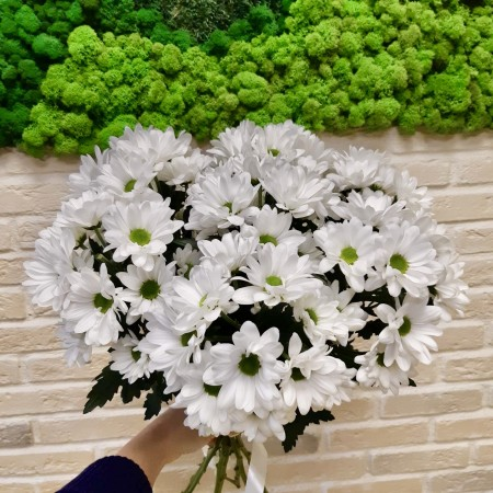Хризантемы Чик