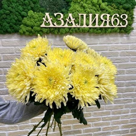 Хризантема одноголовая Магнум желтый