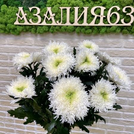 Хризантема одноголовая Эльтруско