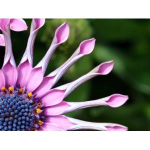 «Нотная грамота» цветочных аранжировок