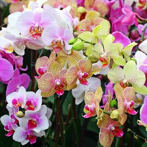 Популярные виды орхидей